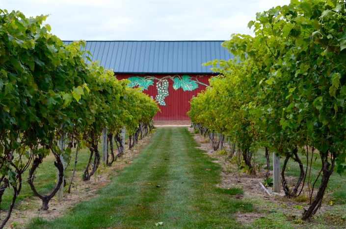 all of the wine was made right here at Rosedale Farm!