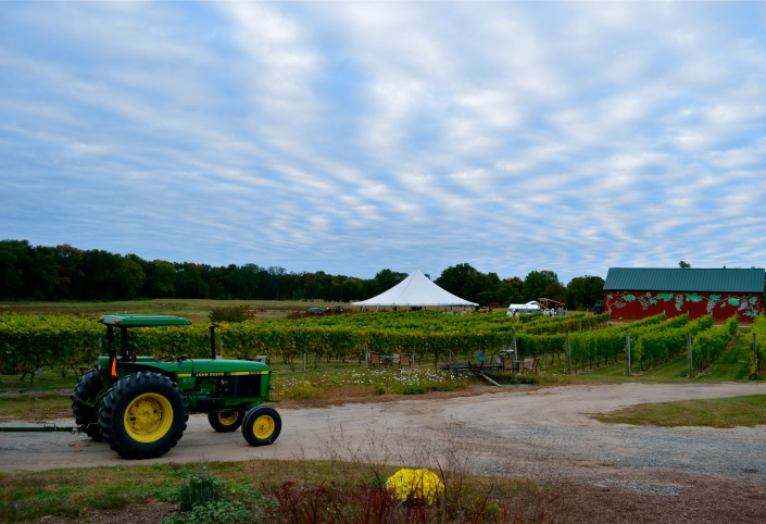 Rosedale Farms & our chef to table dinner tent nestled within the vineyard